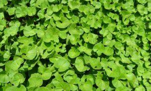 Jídelníček plný rostlin a potravin, které prospívají zdraví