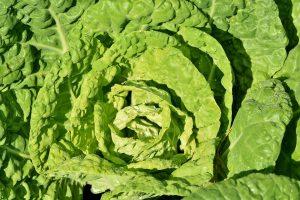 Zelí a jeho účinky na zdraví